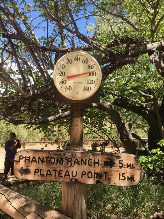 Temperature at the Grand Canyon